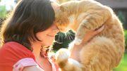 Les 4 bienfaits du chat sur notre santé