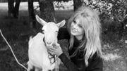 Brigitte Bardot va publier un livre-testament