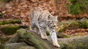 Sept bonnes nouvelles pour les animaux sauvages de nos contrées en 2020