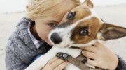 Les visages sont plus importants pour les humains que pour les chiens, selon une étude