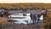 La vie sauvage est omniprésente en Namibie, c'est une des principales richesses du pays.