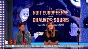 La nuit Européenne des chauves-souris... Même pas peur !