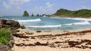 Grandeur Nature sous le soleil de la Guadeloupe