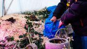 Dans son dôme, Benjamin a installé une vaste zone où il composte les déchets organiques récoltés.