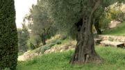 Le Domaine de La Mouissone et ses jardins thématiques au coeur d'une l'oliveraie