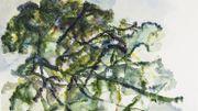 """""""Arborescence"""" l'exposition d'été du Centre d'Art Contemporain du Luxembourg Belge"""