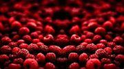 Nos petits fruits rouges de l'été en sangria