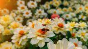 Marché aux plantes rares et de collection ce week-end à Celles