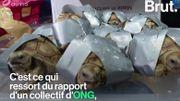 Hong Kong, plaque tournante du trafic illégal d'espèces sauvages