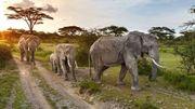"""""""Sors tes dents"""": une campagne de sensibilisation sur le commerce de l'ivoire illégal"""