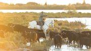 """""""L'Oreille d'abord"""" vous emmène en Camargue: rencontre avec ses gardians et taureaux."""