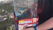 27 petits hamsters sauvés par des joueurs de Pokémon Go