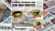 8 millions d'animaux tués sur nos routes chaque année!