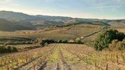 Avec ses 20 hectares, ce jeune viticulteur sort environ 66 000 bouteilles de Fitou par an.