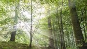 Ça vous dit une balade en forêt de Soignes?