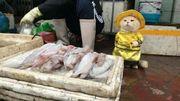 Le poissonnier le plus mignon du Vietnam