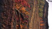 Incendie forestier (1984), de Veerle Dupont.