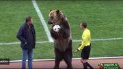 Scène surréaliste en D3 russe : Le ballon du match apporté par... un ours brun