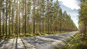 Trop chaud en centre-ville ? Patience, les forêts urbaines vont nous rafraîchir !