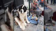 Anne-Marie: «Je ne donne jamais quand il y a un chien»