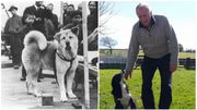Deux histoires entre un maître et son chien qui vous feront craquer