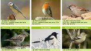 Le déclin des oiseaux