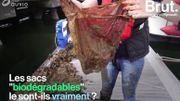 Les sacs «biodégradables» le sont-ils vraiment?