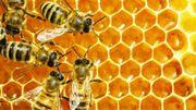 Comment se soigner grâce aux abeilles ?