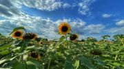 Météo en Belgique: cette année, l'été tombe en septembre!
