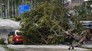 Un taxi endommagé par un arbre à Hong Kong