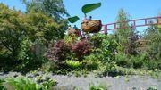 En Anjou : terra botanica