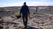 L'Islande veut retrouver ses forêts détruites par les Vikings