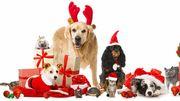 Noël des Animaux au Srpa de Liège ce dimanche 10 décembre