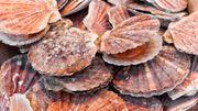 Gastronomie en Baie de Saint-Brieuc