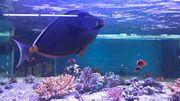 Chaleur et aquariums ne font pas bon ménage
