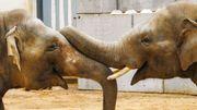 Un éléphant…ça trompe énormément