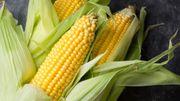 Utiliser des résidus de maïs pour filtrer l'eau ? La méthode est à l'étude