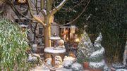 Hivernales au Jardin du curéà Huy