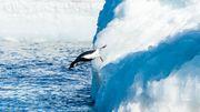 L'association internationale des voyagistes antarctiques a édicté une série de règles strictes en accord avec le traité Antarctique pour réduire l'impact des visiteurs.