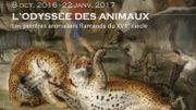 Les peintres animaliers flamands au XVIIe siècle s'exposent au Musée de Flandre à Cassel