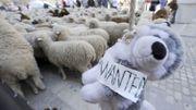 Manifestation anti-loup