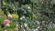 Incursion en Normandie pour une découverte de 26 jardins publics et privés