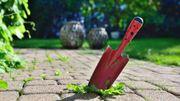 Eliminer les mauvaises herbes sans produit chimique