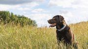 Les 3 dangers à éviter avec nos animaux de compagnie durant l'été