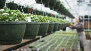 Confinement : pas facile pour les jardineries