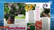 Bons plants parfums