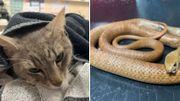 Un chat héroïque décède après avoir sauvé deux enfants d'un serpent mortel