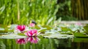 Feng Shui: comment aménager son jardin?