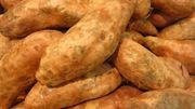 """Découvrez le """"Yacon"""", son look de patate et son goût de poire..."""