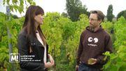 Un OVNI belge viticulteur de vin naturel